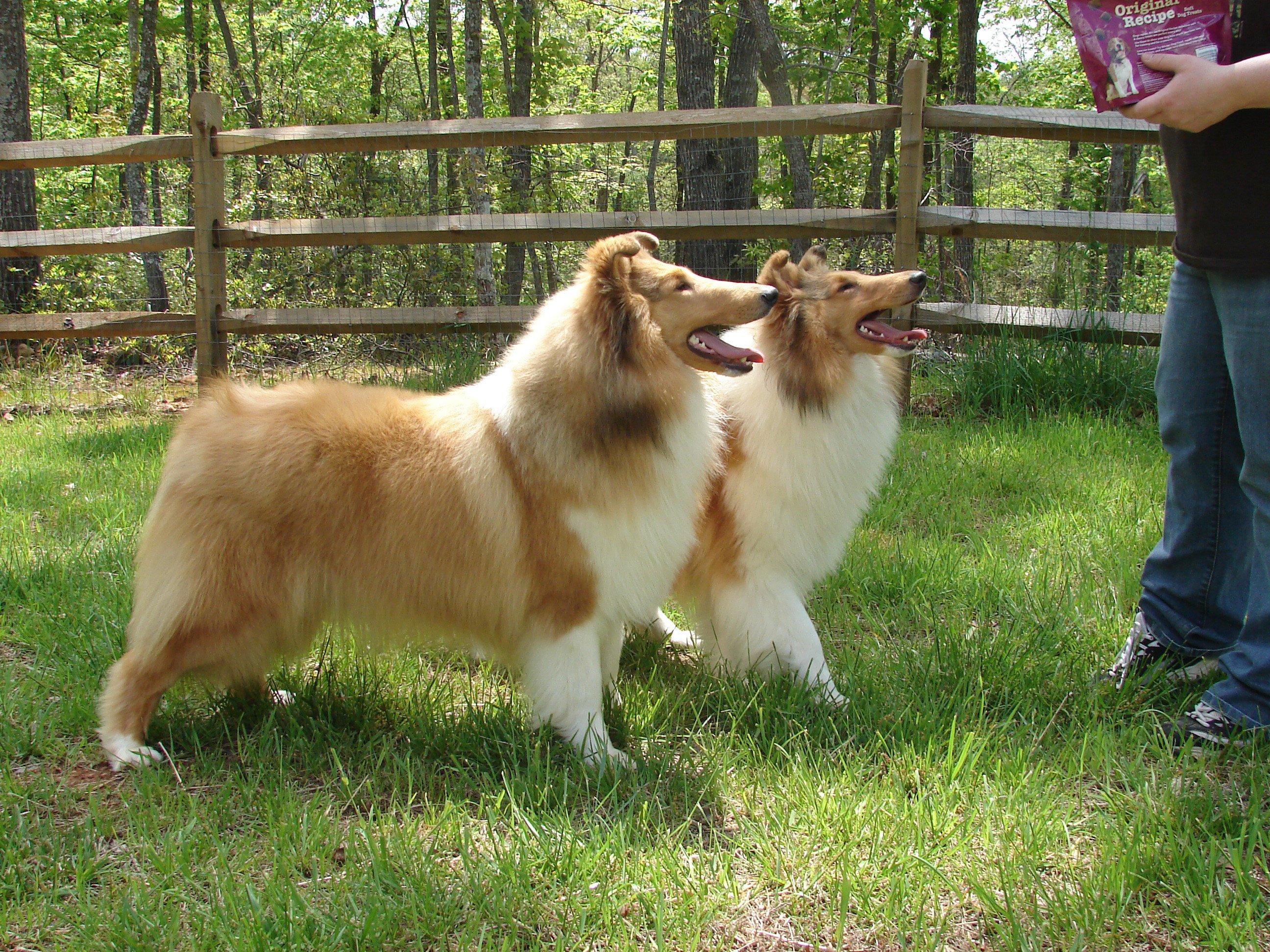 CCNE Fall Puppy Match