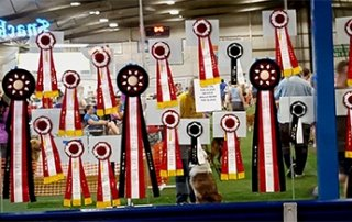 Ribbons won at the Agility show.