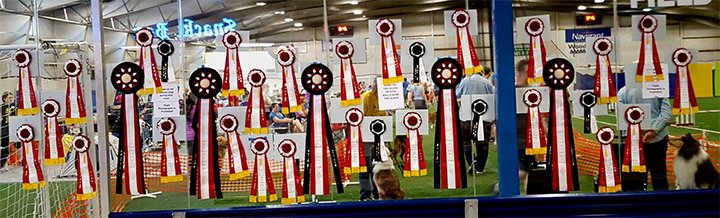 Ribbons won at the Agility show.