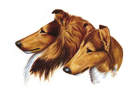 Logo that links to Collie Club of America.